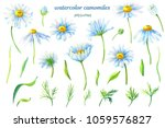 camomiles.floral set.watercolor ... | Shutterstock . vector #1059576827