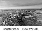 dead tree trunks on corsica... | Shutterstock . vector #1059599081