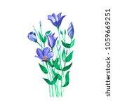 watercolor blue meadow flowers... | Shutterstock . vector #1059669251