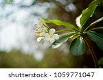 flowers in historical sites in... | Shutterstock . vector #1059771047