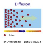 diffusion  high concentration... | Shutterstock .eps vector #1059840335