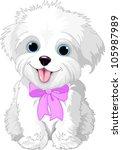 Cute White Lap Dog Puppy Posin...