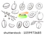 hand drawn plum set isolated on ... | Shutterstock .eps vector #1059973685