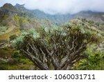 Huge Dragon Tree An Valley - Fine Art prints