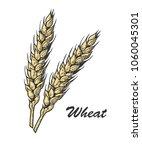 wheat bread ears cereal crop... | Shutterstock .eps vector #1060045301