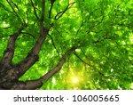 Under Big Green Tree. Nature...
