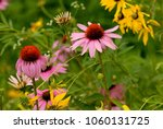 several species of wildflower...   Shutterstock . vector #1060131725