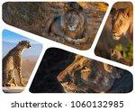 african predatory animals.... | Shutterstock . vector #1060132985