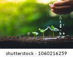 grow coffee beans plant coffee... | Shutterstock . vector #1060216259