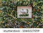 planting succulent plants | Shutterstock . vector #1060227059