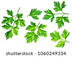 parsley leaves herb. macro shot ... | Shutterstock . vector #1060249334