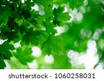 green leaves on the green... | Shutterstock . vector #1060258031
