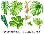 Set Tropical Plants  Palm...