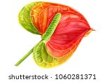 watercolor illustration ... | Shutterstock . vector #1060281371