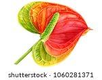 watercolor illustration ... | Shutterstock . vector #1060281371
