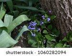 forget me not  myosotis... | Shutterstock . vector #1060282094