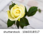 bright white yellow rose on... | Shutterstock . vector #1060318517