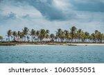 island coast   beach  palm...