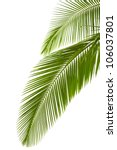 leaves of palm tree  isolated... | Shutterstock . vector #106037801