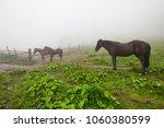 horse in foggy green field.... | Shutterstock . vector #1060380599