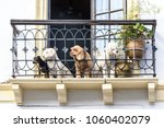 four dogs sitting on a balcony... | Shutterstock . vector #1060402079