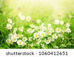 blurred nature summer floral... | Shutterstock . vector #1060412651