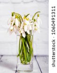 snowdrop flowers isolated on... | Shutterstock . vector #1060491311