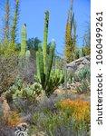 pachycereus pringlei  also... | Shutterstock . vector #1060499261