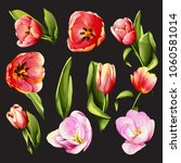 flowers. set of eight tulip... | Shutterstock .eps vector #1060581014