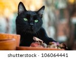 Stock photo black cat with green eyes on a rooftop 106064441