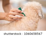 tick and flea prevention for a... | Shutterstock . vector #1060658567