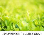 close up shot with selective... | Shutterstock . vector #1060661309