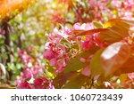 beautiful spring flowers...   Shutterstock . vector #1060723439