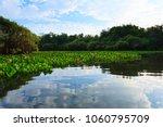 Panorama From Pantanal ...