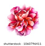 Stock photo ruby red peony isolated on white background hand drawn watercolor illustration 1060796411