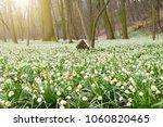 spring flowers in morning light ...   Shutterstock . vector #1060820465