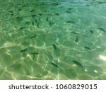 Small photo of transparent shallow water in the Thai with fish Abudefduf ordinary