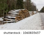 Birch Tree Timber Ready For...