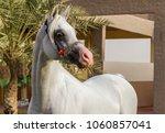 portrait of white arabian horse ... | Shutterstock . vector #1060857041