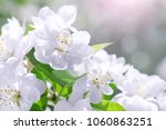 blossom blooming on trees in... | Shutterstock . vector #1060863251