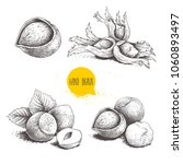hazelnut sketches. single ... | Shutterstock .eps vector #1060893497