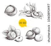 hazelnut sketches. single ... | Shutterstock .eps vector #1060893497