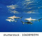 sharks swimming in bora bora... | Shutterstock . vector #1060898594