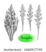 ink sketch of arugula. isolated ... | Shutterstock .eps vector #1060917749
