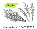 ink sketch of arugula. isolated ... | Shutterstock .eps vector #1060917755