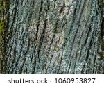 close up of a tree bark... | Shutterstock . vector #1060953827