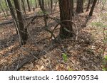 natural twigs and veins... | Shutterstock . vector #1060970534