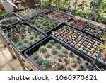 plant seedlings that can be... | Shutterstock . vector #1060970621