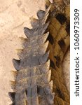 Small photo of osteoderms on the tail of Nile crocodile, Crocodylus niloticus, in a crocodile farm, South Africa