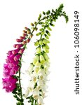 Flowers Of Digitalis On A Whit...